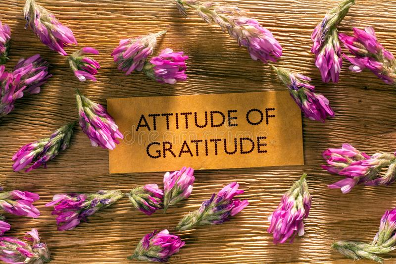 ATTITUDE OF GRATITUDE. In looking memo on brown wood with beautiful red flowers around stock image