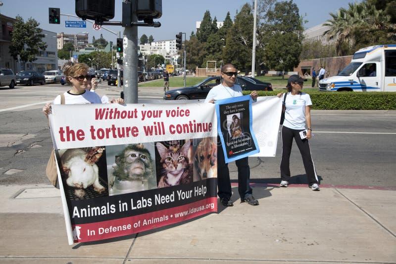 Attivisti di diritti degli'animali al UCLA fotografia stock libera da diritti