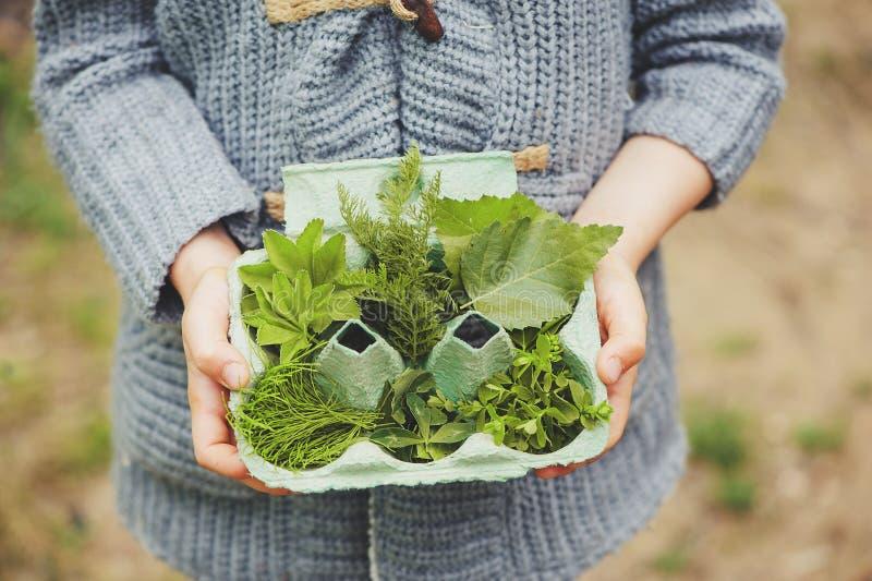 Attività all'aperto per i bambini - caccia di organismo saprofago, foglie di estate che ordinano in scatola delle uova fotografia stock libera da diritti