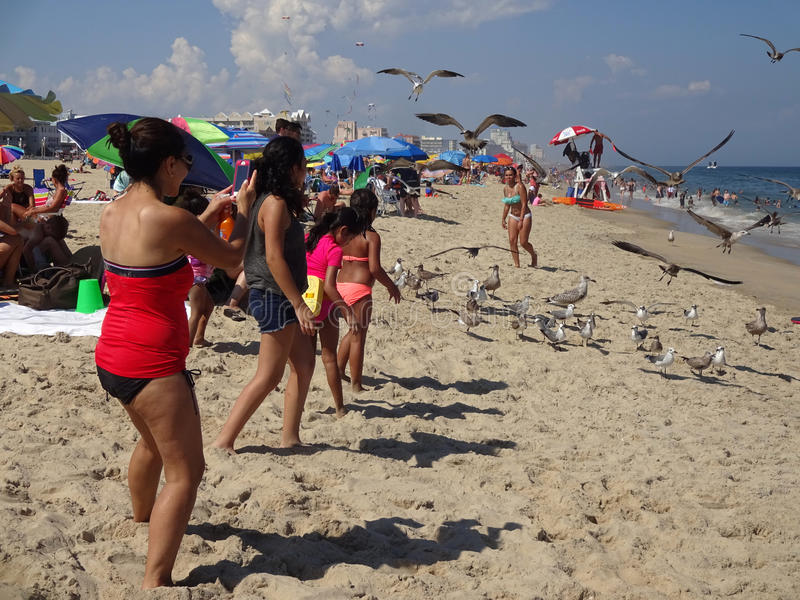 Attracting a Crowd. Photo of people taking photos of the seagulls at the beach in ocean city maryland on 8/17/16. Record heat had many people flocking to the royalty free stock photos