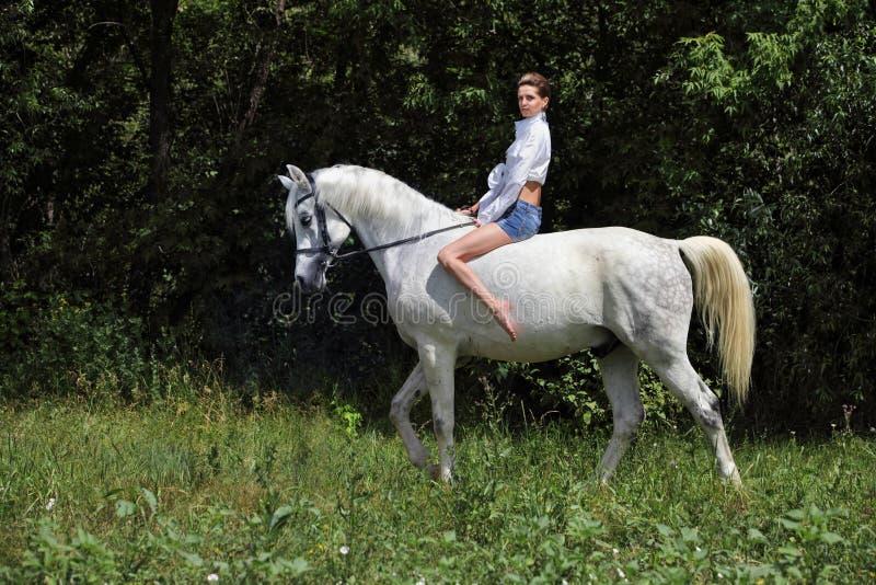 Attractive beauty equestrian girl bareback white horse dark woods portrait. Attractive beauty equestrian model girl riding bareback white horse stock photo