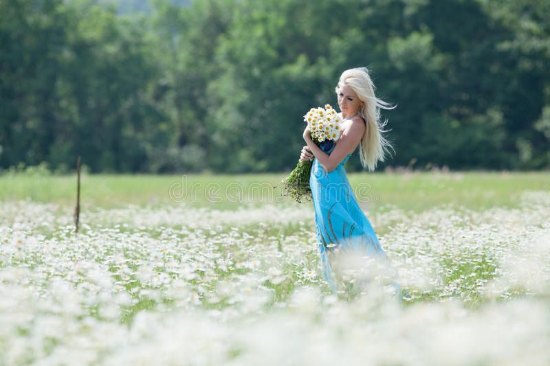 Attractive blonde in chamomile field. Young woman with bouquet of flowers walking through chamomile field royalty free stock photography