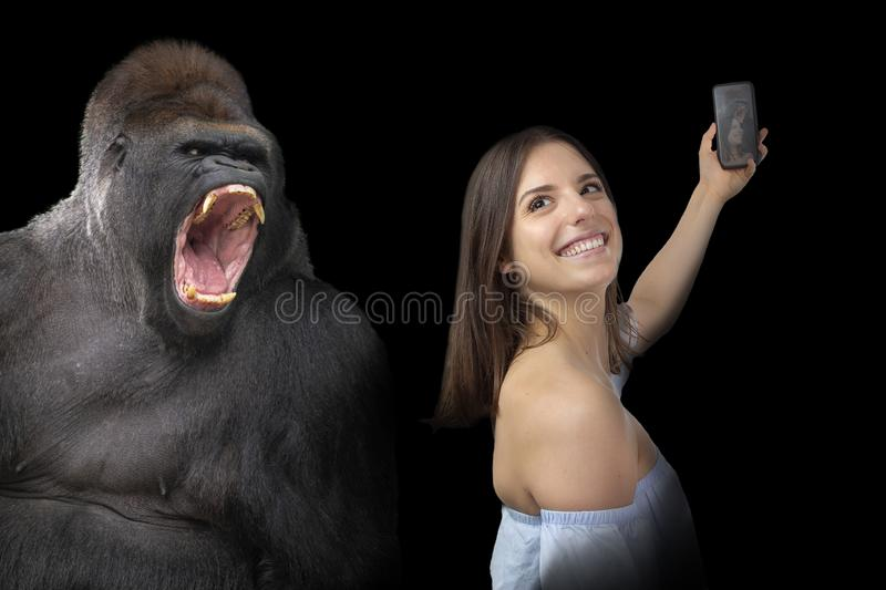 Daring young girl and gorilla stock images