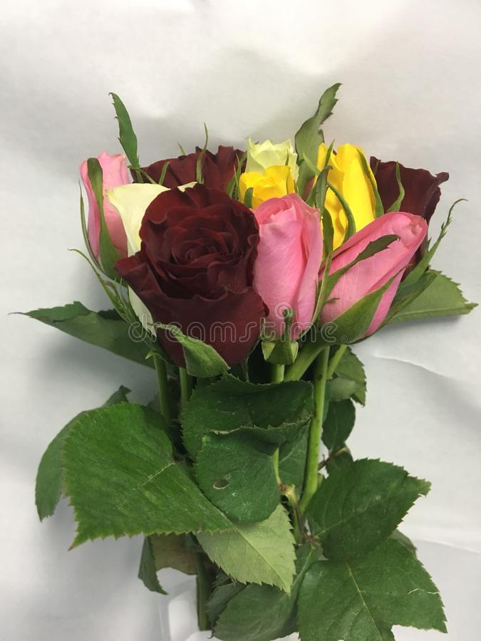 A bunches of roses royalty free stock image