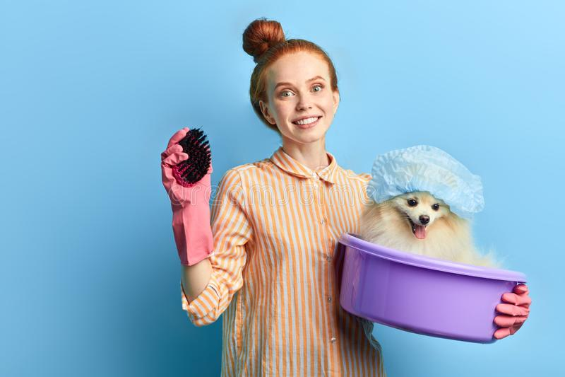 Attractive dog`s owner going to massage her pet with a brush. Close up portrait. isolated blue background, studio shot. lifestyle, free time, spare time stock photography