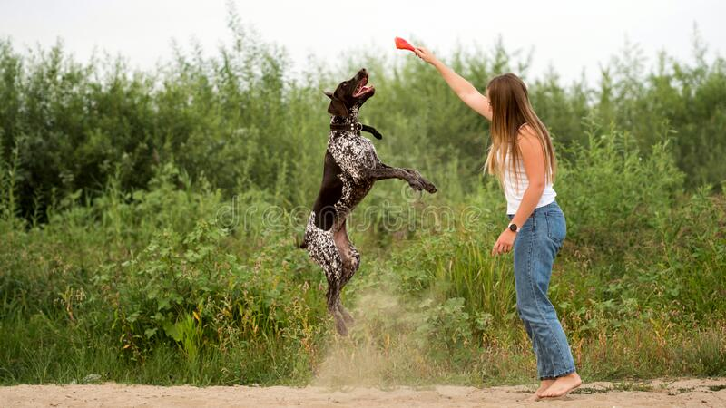 Walk with the dog. Attractive girl walking the dog. Having fun playing in outdoors. Lovely woman training German Shorthaired Pointer on sandy beach on background royalty free stock images