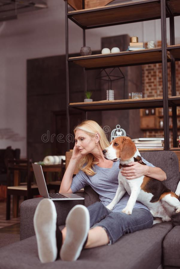 attractive middle aged woman using laptop while sitting with dog royalty free stock photography