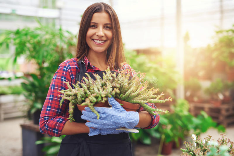 Attractive nursery owner in her greenhouse. Attractive successful nursery owner in her greenhouse holding a potted plant in her hands as she gives the camera a royalty free stock photo
