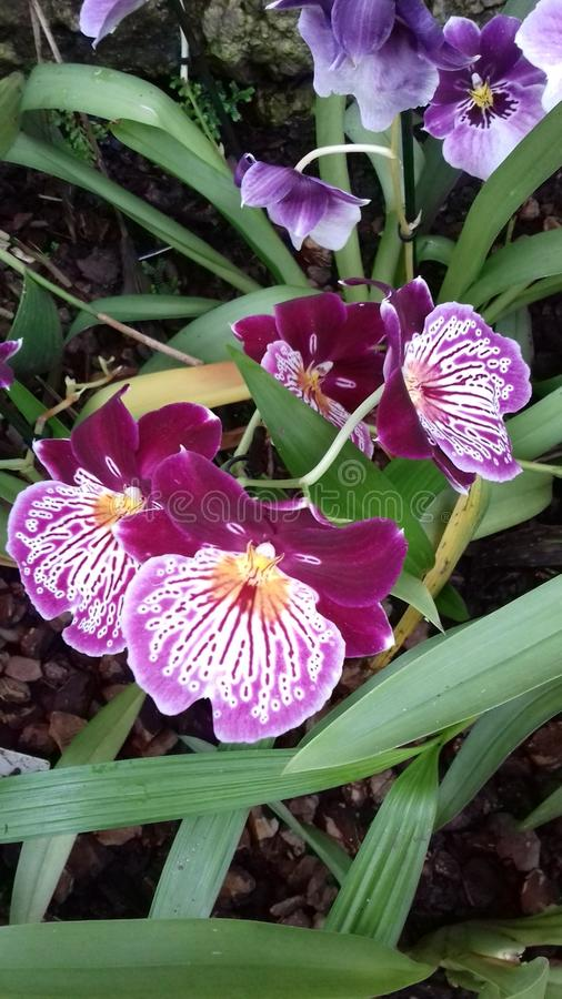 Attractive Orchids at Kew Gardens, London stock photo