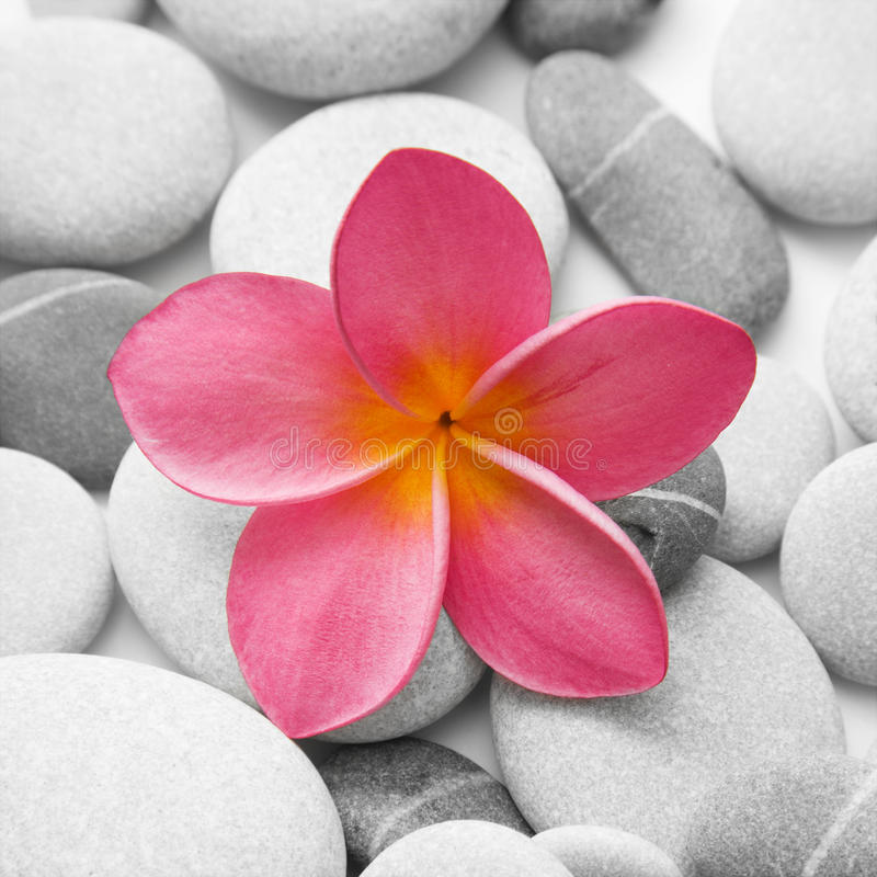Attractive Pebbles and Flower stock photos