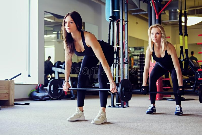 Sporty brunette and blond women doing exercises with barbell in a gym club. stock photography