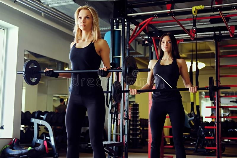 Sporty brunette and blond women doing exercises with barbell in a gym club. royalty free stock image