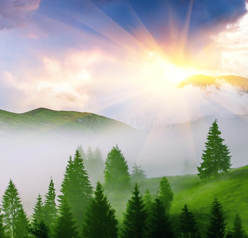 Attractive summer sunrise scenery, scenic view green hills with trees at first morning sun rays and fog covered valley in mountain stock images