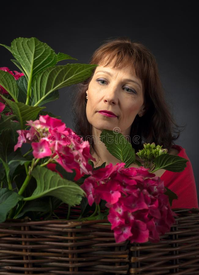 Attractive woman near a bush coral hydrangeas. Forty-year-old woman with hydrangea blossoms stock photo