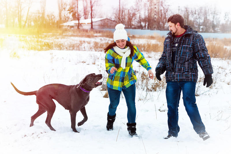 Attractive young boy and girl playing with a dog stock images
