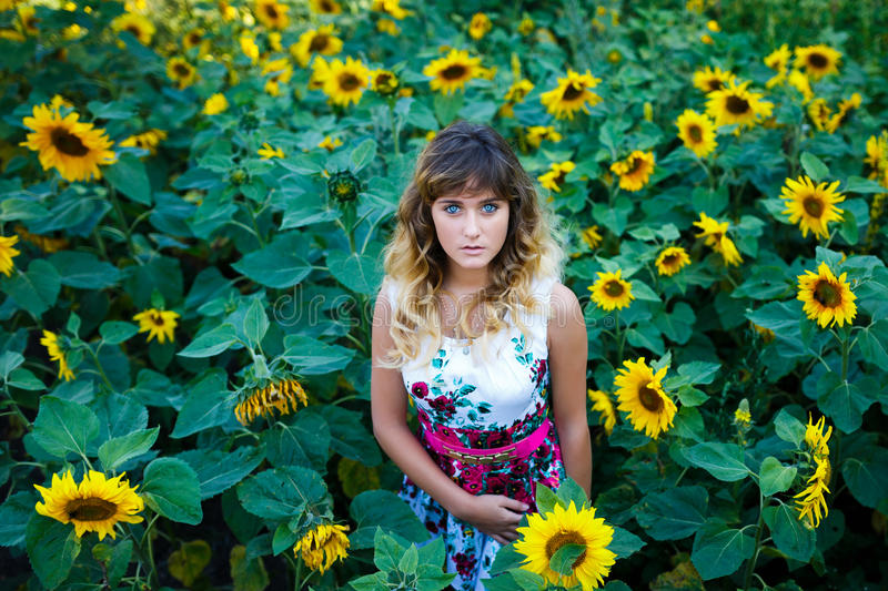 Attractive young girl in the field of sunflowers stock photography