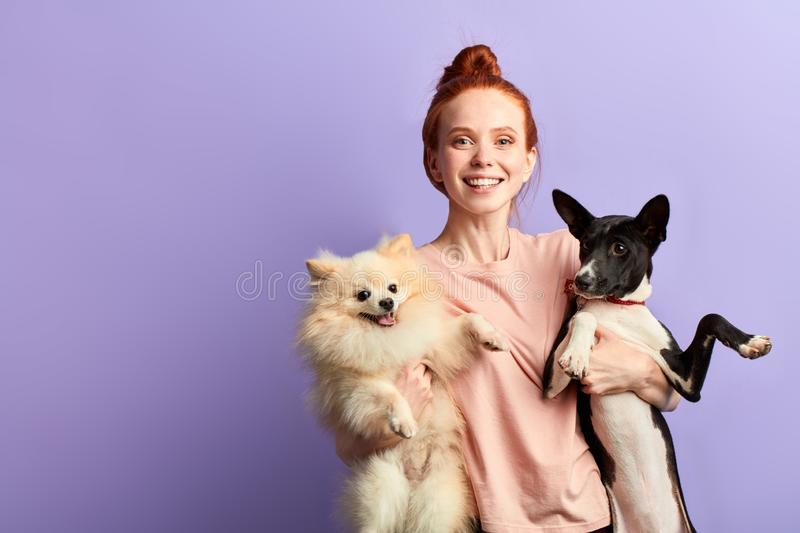 Attractive young smiling ginger woman is embracing her dogs royalty free stock images