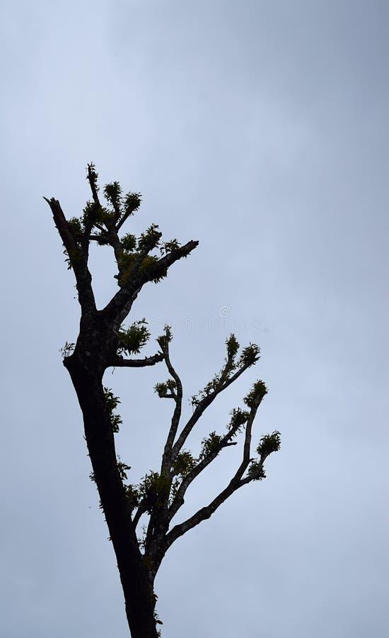 Attraenti alti scoprono il tronco di albero del taglio in foresta contro Misty White Sky nuvolosa immagini stock