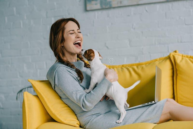 attraktiv gravid kvinna som skrattar och spelar med den stålarrussell terriern royaltyfri bild
