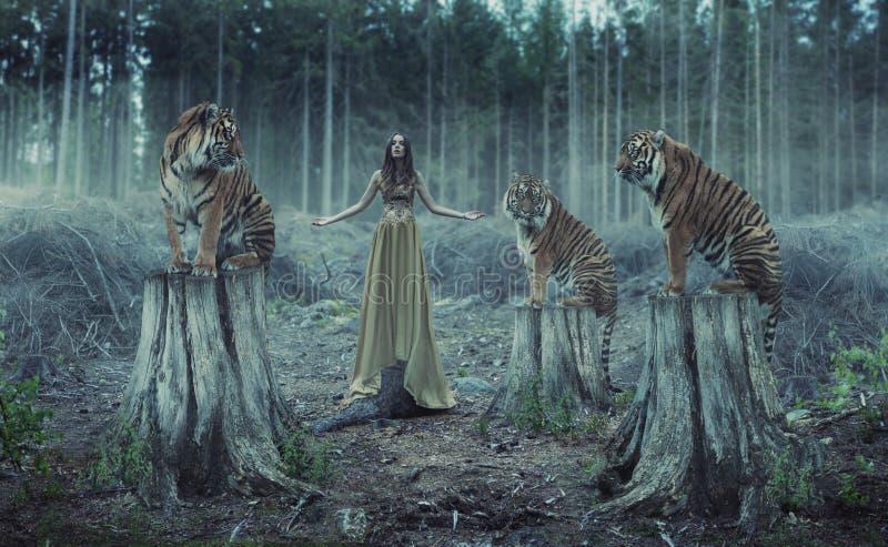 Attraktiv kvinnlig instruktör med tigrarna royaltyfri foto