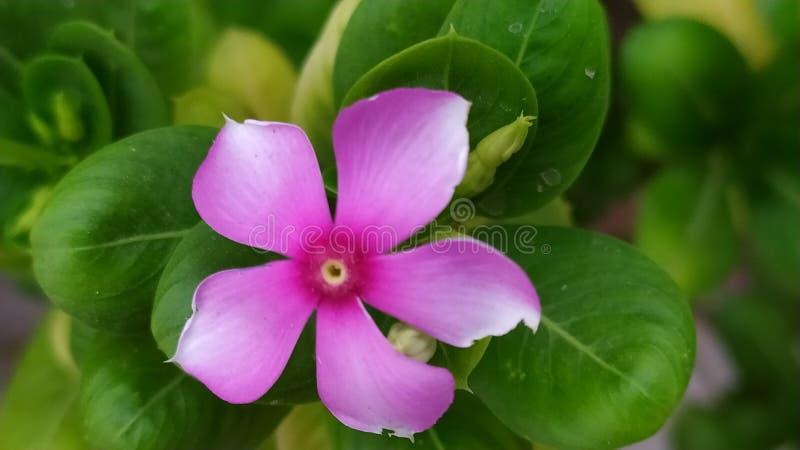 Attraktiv purpurfärgad blomma med gräsplan arkivfoto