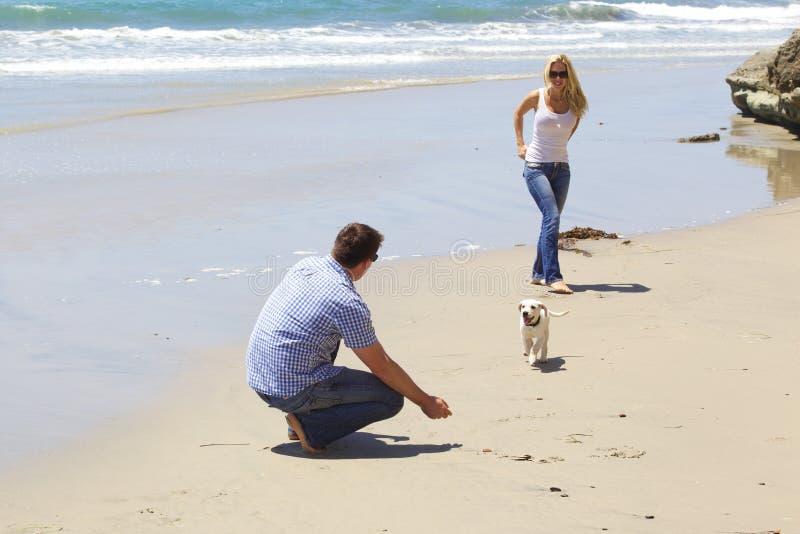 Attraktiva par som spelar med deras valp på stranden royaltyfri fotografi