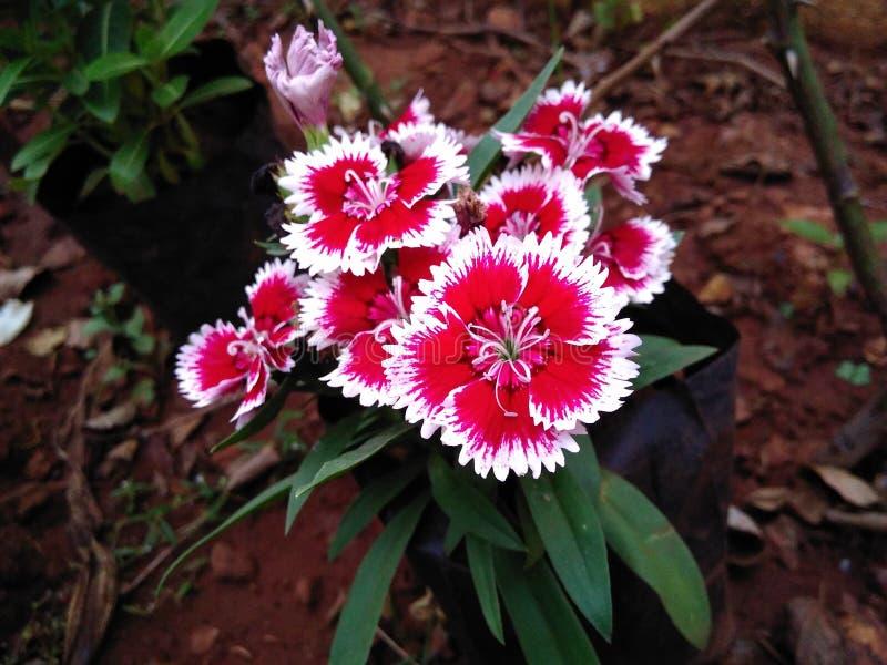 Attraktive Blume lizenzfreies stockbild