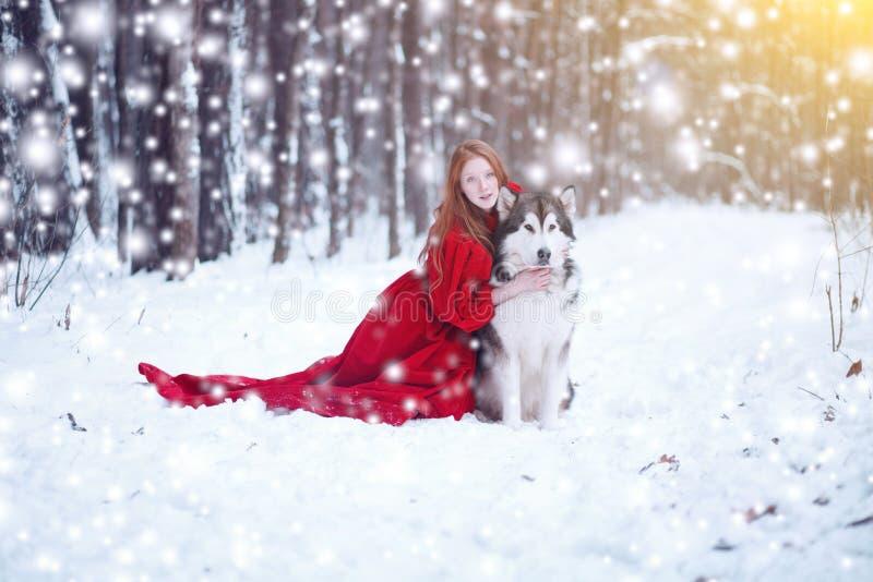 Attraktive Frau mit den Hunden Schlittenhunde oder Malamute Weihnachten stockbild