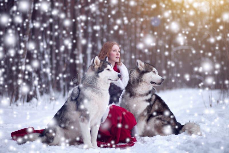 Attraktive Frau mit den Hunden Schlittenhunde oder Malamute Weihnachten lizenzfreie stockfotografie