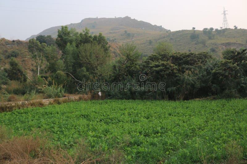 Attraktive kühle grüne Landschaft lizenzfreies stockbild