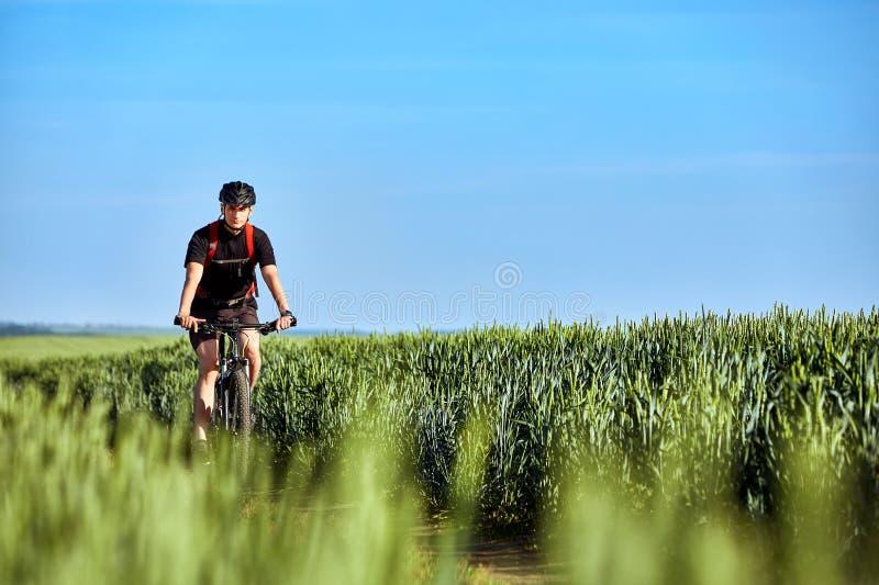 Attraktiver Radfahrerreitgebirgsradfahrer auf dem Sommergrüngebiet stockbilder