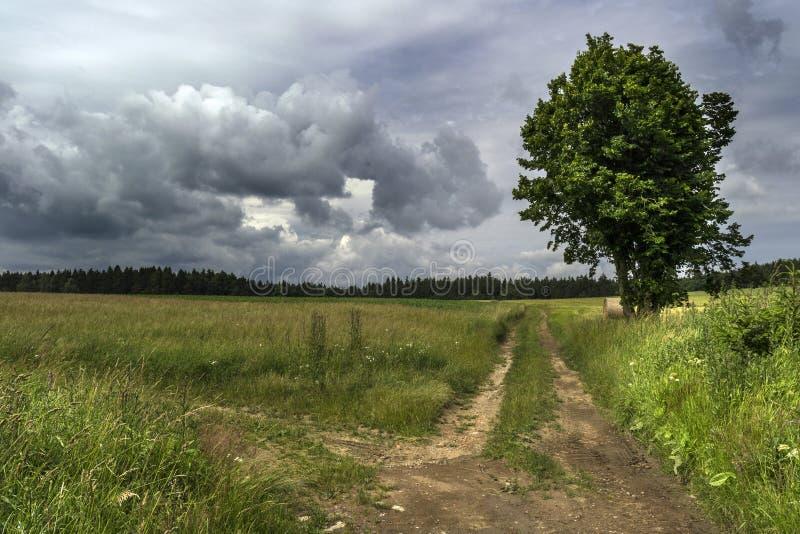 Attraversamento del prato sotto le nuvole di tempesta con un grande albero nei precedenti di legni fotografia stock