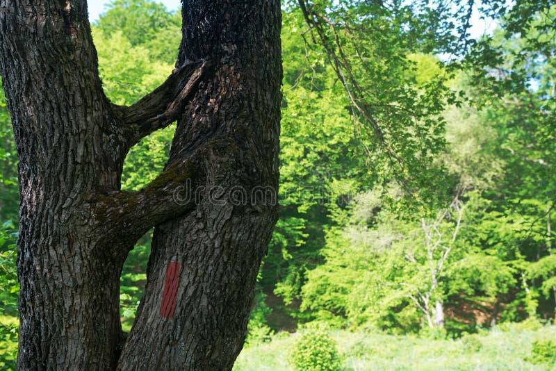 Attraversamento, occupante su un vecchio tronco di albero fotografia stock libera da diritti