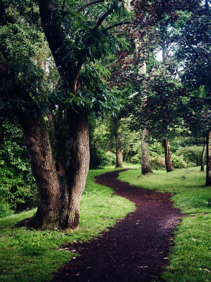 Attraversare il bosco fotografia stock
