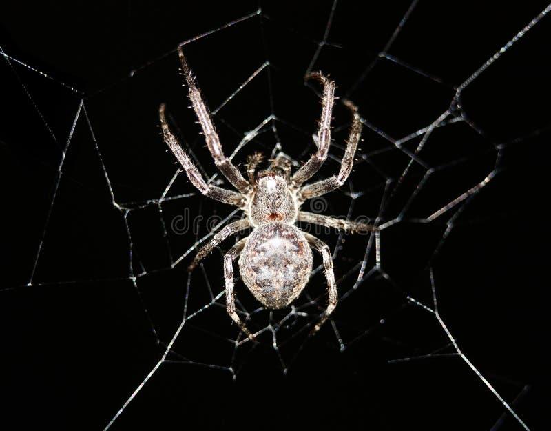 attraversi il suo Web di ragno fotografia stock