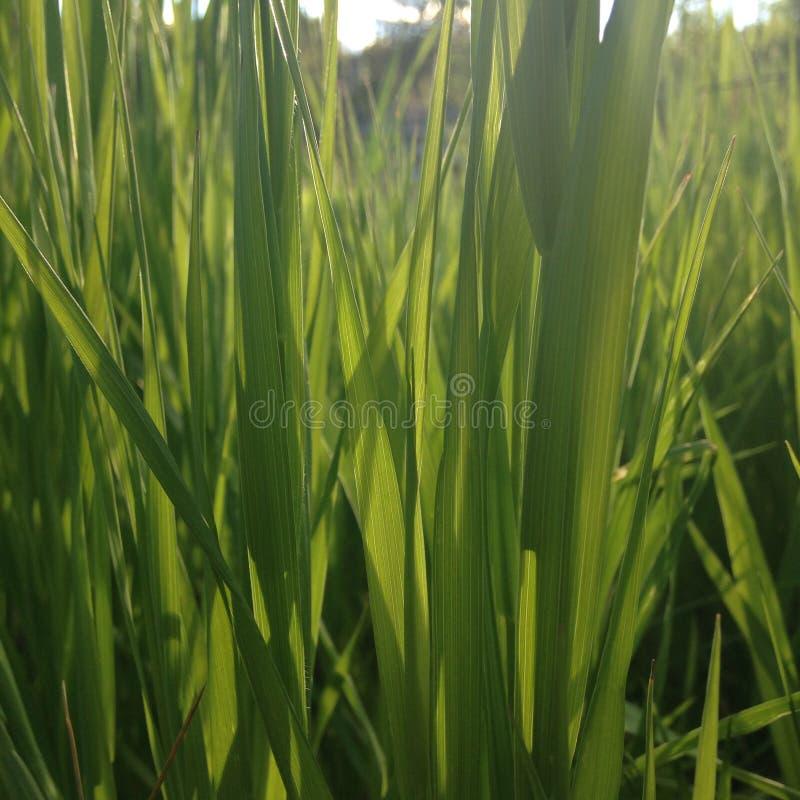 Attraverso l'erba immagine stock