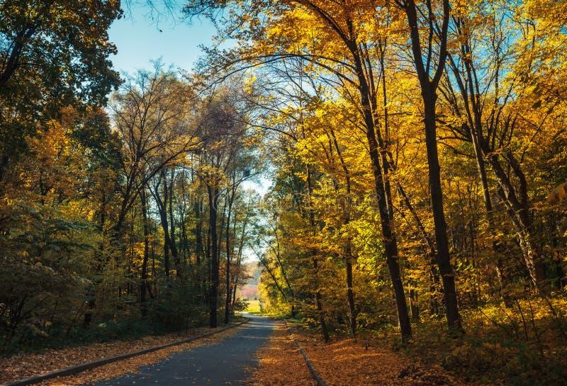 Attraverso la foresta fotografia stock