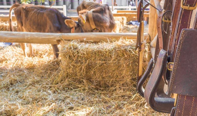 attrezzatura del cavallo da equitazione immagine stock libera da diritti