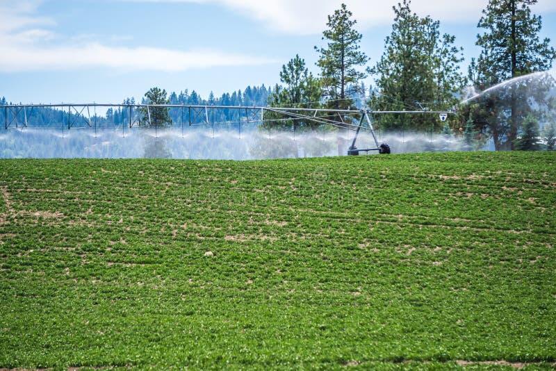 Attrezzatura di irrigazione sul campo dell'azienda agricola il giorno soleggiato fotografia stock libera da diritti
