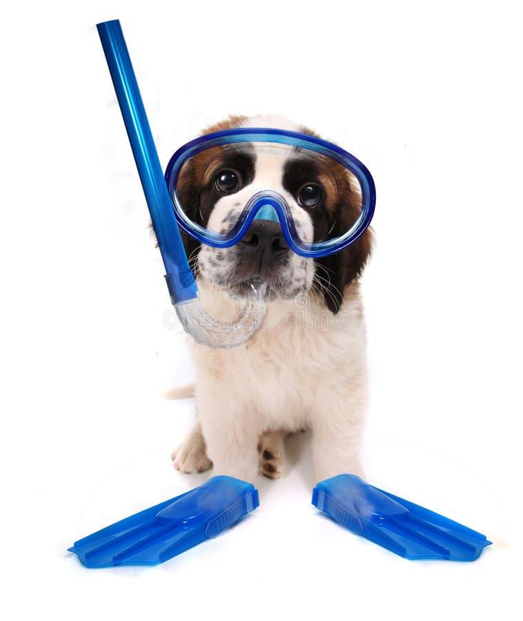 Attrezzo navigante usando una presa d'aria da portare del cucciolo su priorità bassa bianca immagini stock