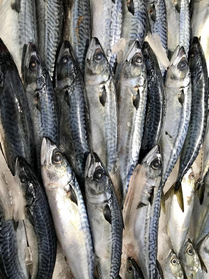 Atum fresco foto de stock