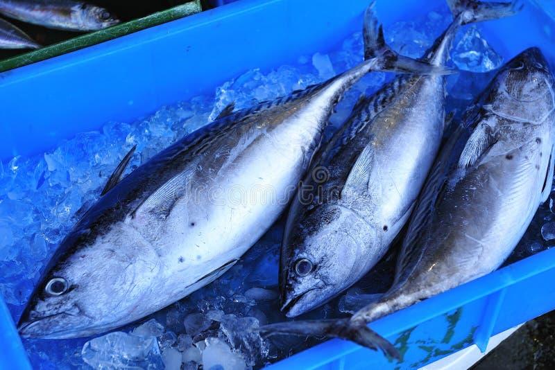 Atum fresco no mercado de peixes fotos de stock