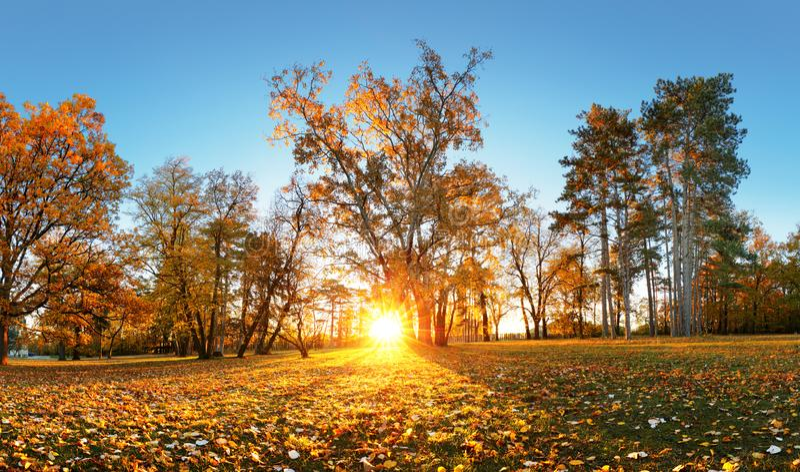 atumn的美丽的公园庭院 秋天全景在日出的公园 库存图片