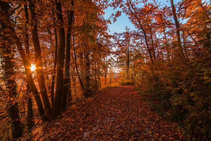 Atumn forest road at sunset. Atumn road trough forest in colors stock photos