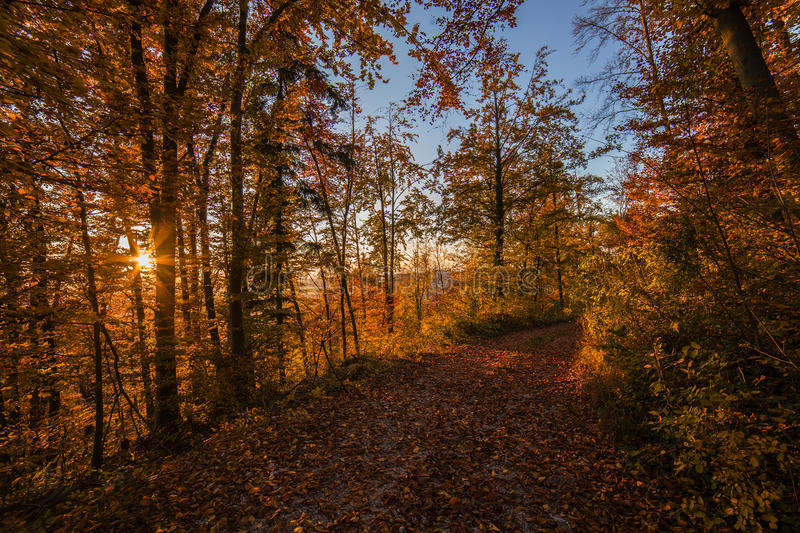 Atumn forest road at sunset. Atumn road trough forest in shine colors royalty free stock photos
