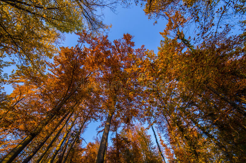 Atumn forest. Atumn road trough forest in colors royalty free stock photography