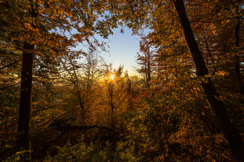 Atumn forest sunset. Atumn road trough forest in colors royalty free stock images