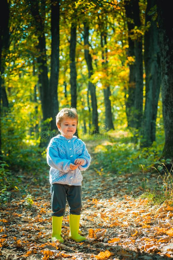 Atumn fun at the park. Child in park. Kid walking in autumn park, fall day. royalty free stock image