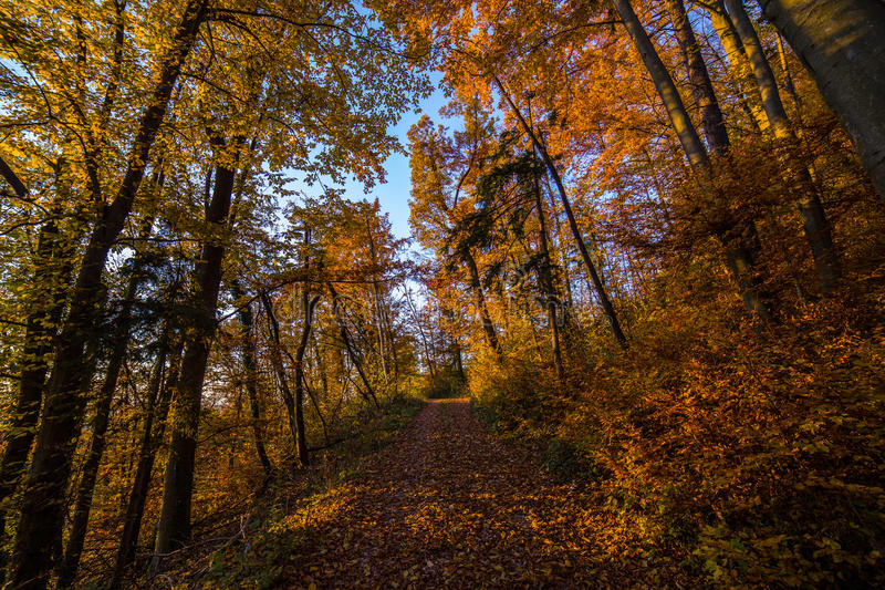 Atumn road trough forest. In slovenian alps royalty free stock photography