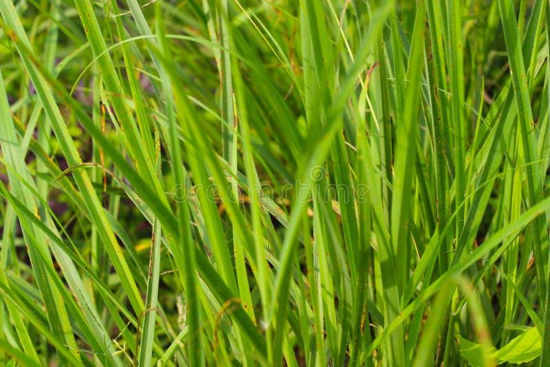 Aturdindo amantes de Forest Green Grass For Nature foto de stock